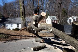 Fredericksburg Tree Trimming