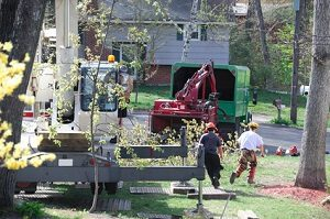 tree care fredericksburg va