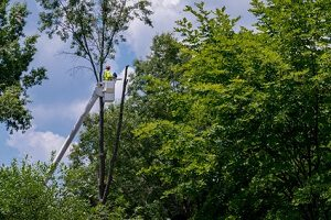 tree trimming fredericksburg